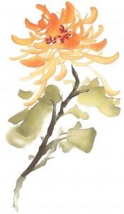 Li fleur grande pétale stage de peinture chinoise