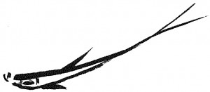 1 poisson perche stage de calligraphie chinoise