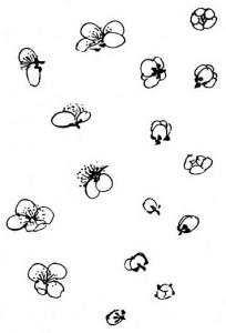 Fleurs boutons moine